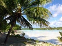 Scène tropicale aux Fidji avec des palmiers dans le coucher du soleil par l'océan Photos stock