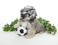 Scoccer Puppy Royalty Free Stock Photos