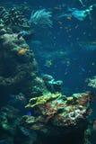 Scogliera con i pesci variopinti Immagini Stock Libere da Diritti