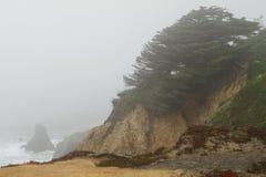 Scogliera con una conifera in giorno nebbioso Fotografia Stock Libera da Diritti