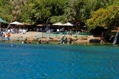 Scogliera del delfino sul Mar Rosso fotografie stock libere da diritti
