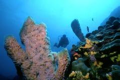 Scogliera del Dominica Fotografia Stock