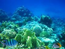scogliera del Duro-corallo Immagini Stock