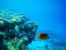 scogliera del Duro-corallo in Mar Rosso immagini stock libere da diritti