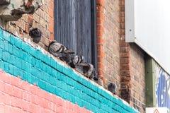 Scogliera del piccione Immagini Stock Libere da Diritti