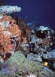 Scogliera del South Pacific immagine stock libera da diritti