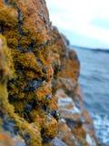Scogliera dell'oceano Fotografie Stock
