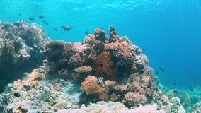 Scogliera di Apo, barriera corallina in Filippine Fotografie Stock