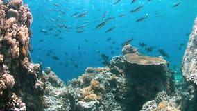 Scogliera di Apo, barriera corallina in Filippine Fotografie Stock Libere da Diritti