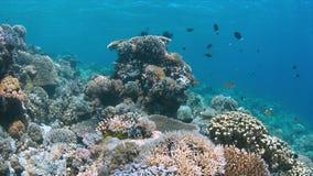 Scogliera di Apo, barriera corallina in Filippine Immagini Stock Libere da Diritti