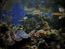scogliera di corallo dell'Hawai fotografie stock