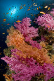 Scogliera e banco colorato dei pesci, Mar Rosso, Egitto Fotografia Stock Libera da Diritti