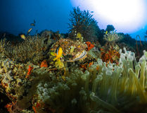 Scogliera e corallo Maldive Immagine Stock Libera da Diritti