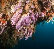 Scogliera e corallo Maldive Fotografie Stock