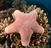 Scogliera e corallo Maldive Immagini Stock Libere da Diritti