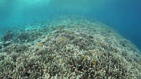 Scogliera e pesce tropicali stock footage