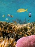 Scogliera e pesci tropicali Fotografia Stock Libera da Diritti