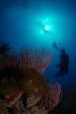 Scogliera e un operatore subacqueo Immagini Stock