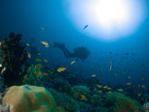 Scogliera ed operatore subacqueo Maldive Fotografia Stock