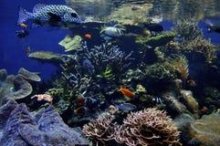 scogliera hawaiana di corallo fotografie stock libere da diritti