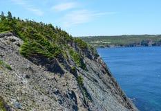 Scogliera laterale dell'oceano coperta di pini Immagini Stock Libere da Diritti