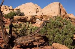 Scogliera NP, Utah, U.S.A. del Campidoglio Fotografia Stock Libera da Diritti