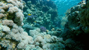 Scogliera, pesce, pesci esotici stock footage