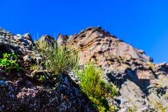 Scogliera rocciosa alta in montagne del Madera Fotografia Stock