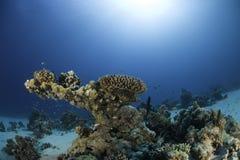 Scogliera subacquea immagini stock