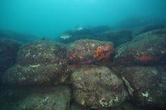 Scogliera subacquea con i massi fotografia stock