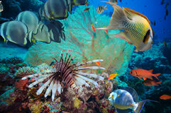 Scogliera subacquea variopinta con corallo e le spugne Fotografia Stock