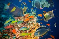 Scogliera subacquea variopinta con corallo e le spugne Fotografie Stock Libere da Diritti