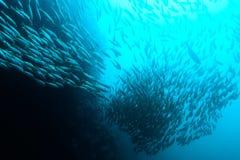 Scogliera tropicale subacquea in Tailandia Immagine Stock Libera da Diritti