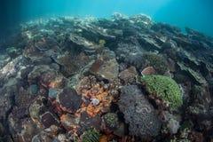 Scogliera variopinta in laguna tropicale Fotografia Stock