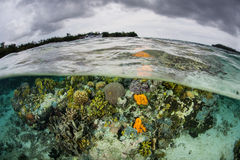 Scogliera variopinta in Solomon Islands Immagini Stock