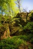 Scogliera verde in foresta Fotografie Stock Libere da Diritti