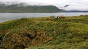 Scogliere del trabjarg del ¡ di LÃ, il santuario dei puffini, in Islanda archivi video