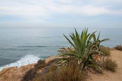 Scogliere di tramonto a San Diego con la pianta gigante dell'aloe Fotografie Stock Libere da Diritti