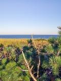 Scogliere nazionali della spiaggia di Cape Cod a Goldenhour immagine stock libera da diritti