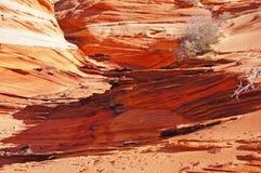 Scogliere regione selvaggia, Arizona, U.S.A. di Paria Canyon-Vermilion Fotografia Stock Libera da Diritti