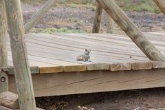 scoiattolo Fotografia Stock