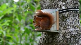 scoiattolo archivi video