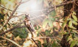Scoiattolo in albero Fotografie Stock