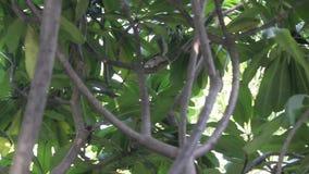 Scoiattolo in albero stock footage