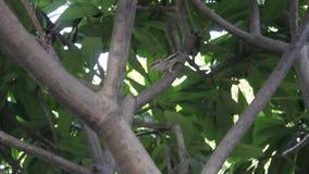 Scoiattolo in albero video d archivio