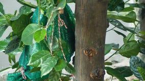 Scoiattolo che mangia giaca sull'albero stock footage