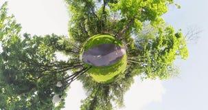 Scoiattolo minuscolo del pianeta nel parco stock footage