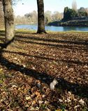 Scoiattolo in parco Fotografia Stock