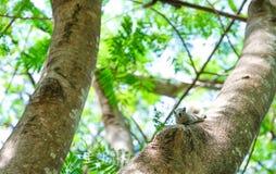 Scoiattolo piccolo sull'albero Fotografia Stock