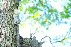 Scoiattolo piccolo sull'albero Fotografia Stock Libera da Diritti